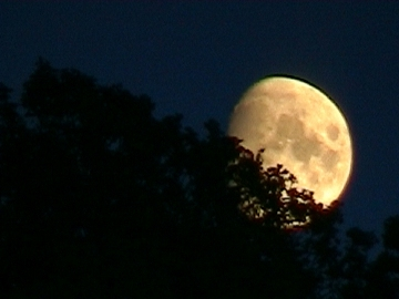 The moon rising behind the Hill of Ardmore; own picture, 2003