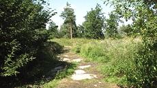 Park's Wood